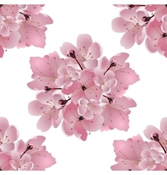 Japanese cherry Bouquet of pink cherry blossom vector image vector image