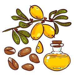 Set of argan oil vector