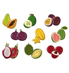 Assortment of fresh harvested tropical fruits vector