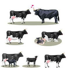 Cow life with all stages including birth vector