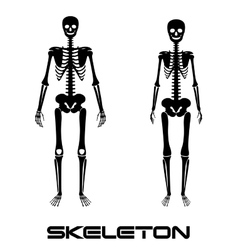 Male and female skeleton - silhouettes vector image vector image