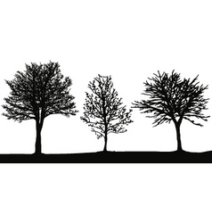 winter trees vector image