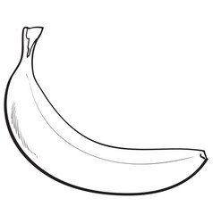 One unopened unpeeled ripe banana sketch style vector