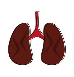 lungs anatomy icon image vector image