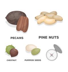 Pecan pine nut pumpkin seeds chestnutdifferent vector