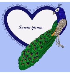 Background with peacock and heart shape banner vector