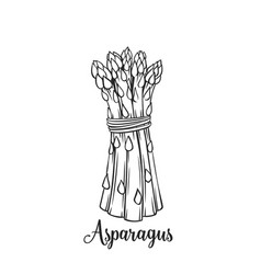 Hand drawn asparagus icon vector