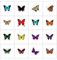 Realistic purple monarch tropical moth callicore vector