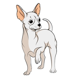 Drawing of a chihuahua isolated objects vector image