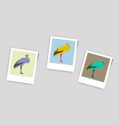 Polaroid photo of stork vector