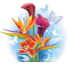 Bouquet of strelitzia and calla flowers vector