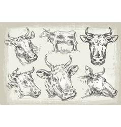 collection of hand-drawn cows vector image vector image