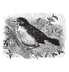 Robin redbreast vintage vector