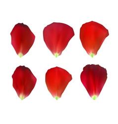 Set of naturalistic rose petals vector