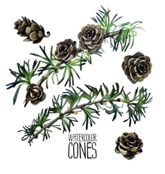 Watercolor larch cones and branches vector