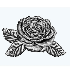 Rose bud with leaves painted in watercolor style vector