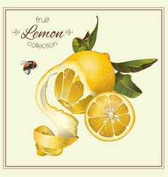 Realistic of lemon vector