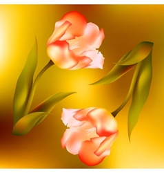 Flower tulips flower spring petal tulip isolated vector