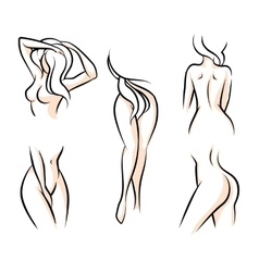 Female body parts vector