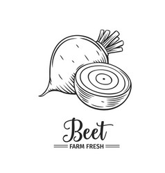 hand drawn beet icon vector image vector image