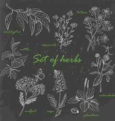 Set of isolated herbs in sketch style on dark vector