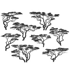 Silhouettes of african acacia trees vector