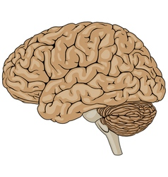 Human brain brown vector