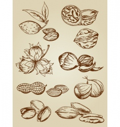 set of various nuts vector image vector image