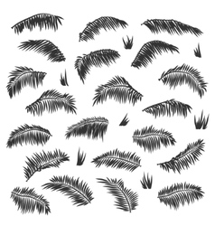 Silhouette palm leaves set isolated vector