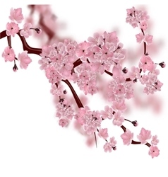 Japanese cherry tree the fluffy pink cherry vector