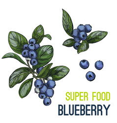 full color super food hand drawn sketch vector image vector image