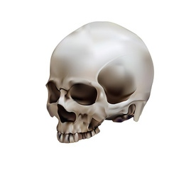 Human skull in white background vector