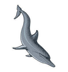 sea creature dolphin engraved hand drawn in old vector image