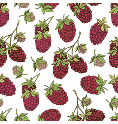 berries collection-07 vector image vector image