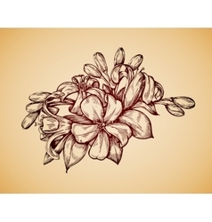 Vintage flower Hand drawn retro sketch jasmine vector image vector image