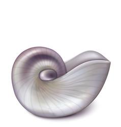 Nautilus sea shell vector
