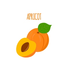 Ripe tasty apricot on a white background vector
