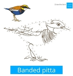 Banded pitta bird learn to draw vector
