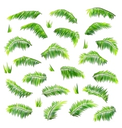 colored palm leaves set isolated on white vector image