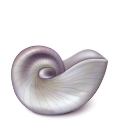 Nautilus sea shell vector
