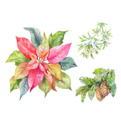 Set of christmas plants poinsettia fir branch vector