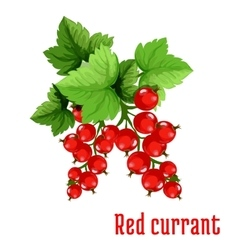 Red currant fruit cartoon icon vector