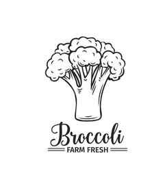 hand drawn broccoli icon vector image
