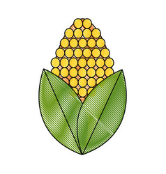 Drawing corn bioful alternative energy ethanol vector