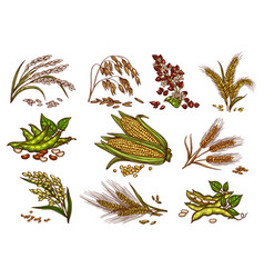 grain and cereals isolated icons vector image