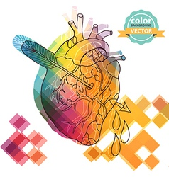 Anatomical color heart with arrow vector image vector image