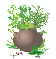 Bouquet fresh herbs in ceramic pot vector image vector image
