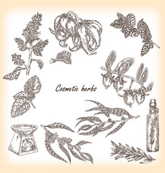 cosmetic herbs vector image vector image