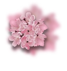 Japanese cherry Sakura Bouquet of pink flowers vector image vector image