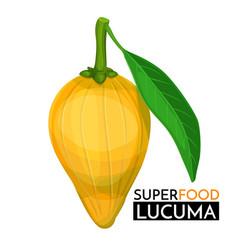 lucuma icon vector image